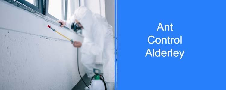 Ant Control Alderley